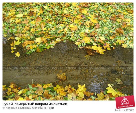 Ручей, прикрытый ковром из листьев, фото № 97542, снято 3 октября 2007 г. (c) Наталья Волкова / Фотобанк Лори
