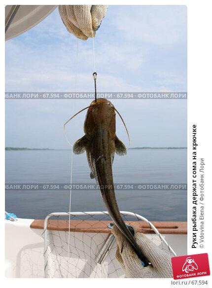 Руки рыбака держат сома на крючке, фото № 67594, снято 28 июня 2007 г. (c) Vdovina Elena / Фотобанк Лори