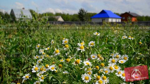 Rural landscape. Focus on daisies, видеоролик № 26930254, снято 24 августа 2017 г. (c) Володина Ольга / Фотобанк Лори