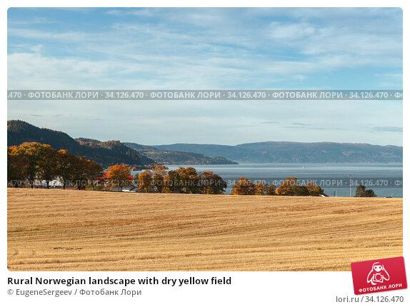 Купить «Rural Norwegian landscape with dry yellow field», фото № 34126470, снято 18 октября 2016 г. (c) EugeneSergeev / Фотобанк Лори