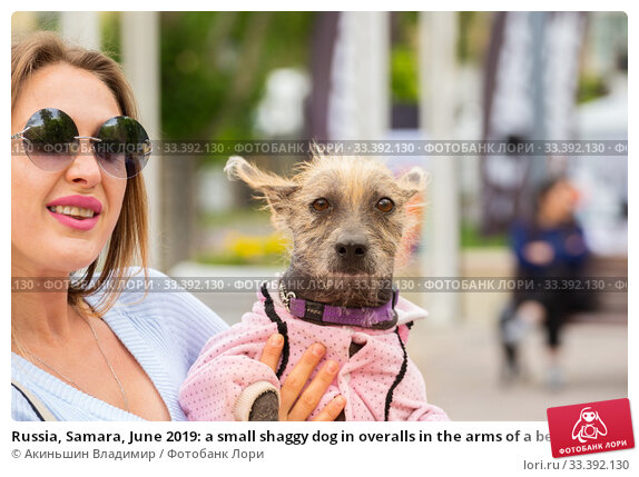Купить «Russia, Samara, June 2019: a small shaggy dog in overalls in the arms of a beautiful mistress.», фото № 33392130, снято 18 мая 2019 г. (c) Акиньшин Владимир / Фотобанк Лори