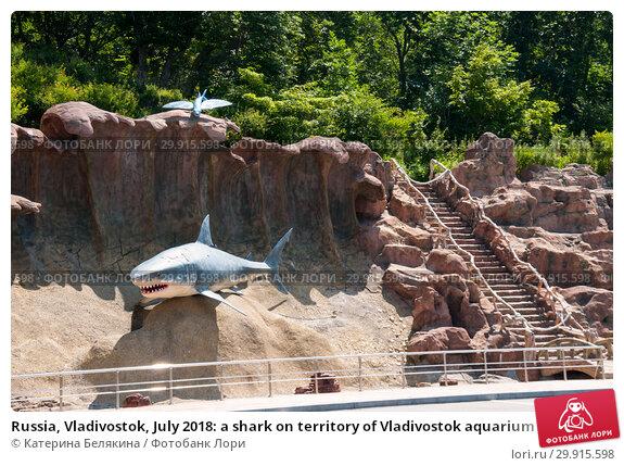 Купить «Russia, Vladivostok, July 2018: a shark on territory of Vladivostok aquarium», фото № 29915598, снято 28 июля 2018 г. (c) Катерина Белякина / Фотобанк Лори