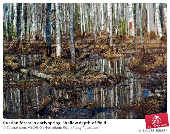 Russian forest in early spring. Shallow depth-of-field. Стоковое фото, фотограф Zoonar.com/MYCHKO / easy Fotostock / Фотобанк Лори