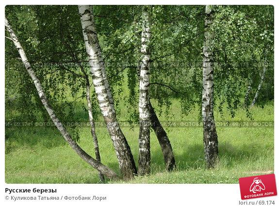 Русские березы, фото № 69174, снято 10 мая 2003 г. (c) Куликова Татьяна / Фотобанк Лори
