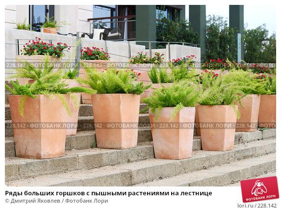 Ряды больших горшков с пышными растениями на лестнице, фото № 228142, снято 3 октября 2007 г. (c) Дмитрий Яковлев / Фотобанк Лори