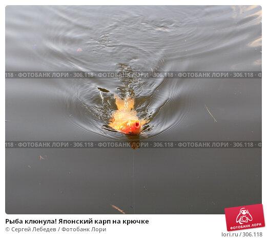 Рыба клюнула! Японский карп на крючке, фото № 306118, снято 10 мая 2008 г. (c) Сергей Лебедев / Фотобанк Лори