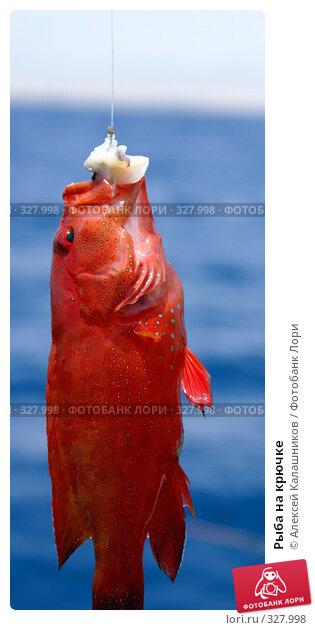 Рыба на крючке, фото № 327998, снято 10 июня 2008 г. (c) Алексей Калашников / Фотобанк Лори