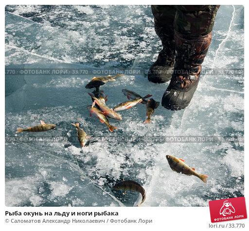 Рыба окунь на льду и ноги рыбака, фото № 33770, снято 17 марта 2007 г. (c) Саломатов Александр Николаевич / Фотобанк Лори