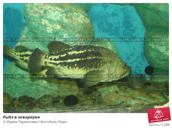 Рыба в аквариуме, эксклюзивное фото № 1290, снято 15 сентября 2005 г. (c) Ирина Терентьева / Фотобанк Лори