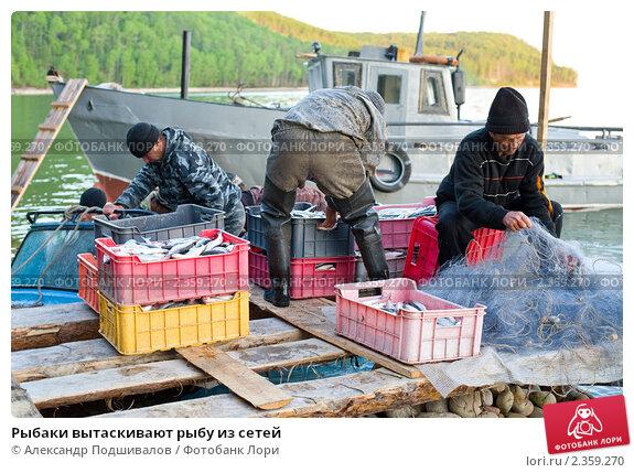 вытягивают рыбаки сеть