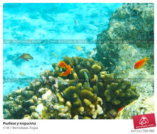 Рыбки у коралла, фото № 326966, снято 28 марта 2017 г. (c) Михаил / Фотобанк Лори