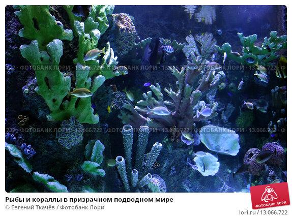 Купить «Рыбы и кораллы в призрачном подводном мире», фото № 13066722, снято 28 июля 2015 г. (c) Евгений Ткачёв / Фотобанк Лори