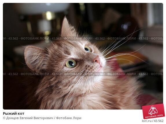 Рыжий кот, фото № 43562, снято 30 января 2007 г. (c) Донцов Евгений Викторович / Фотобанк Лори