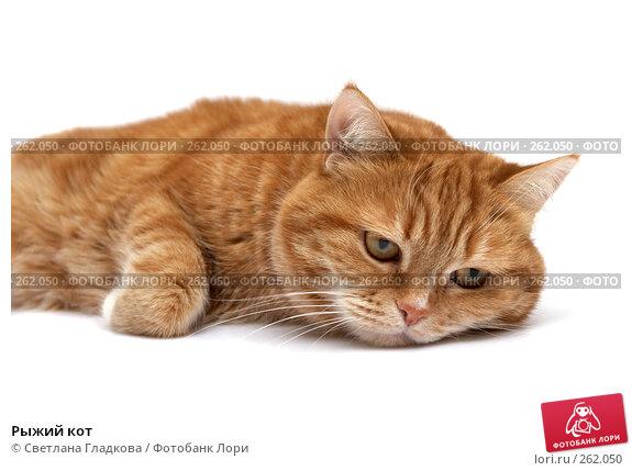 Рыжий кот, фото № 262050, снято 8 апреля 2008 г. (c) Cветлана Гладкова / Фотобанк Лори