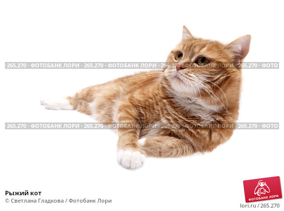Рыжий кот, фото № 265270, снято 8 апреля 2008 г. (c) Cветлана Гладкова / Фотобанк Лори