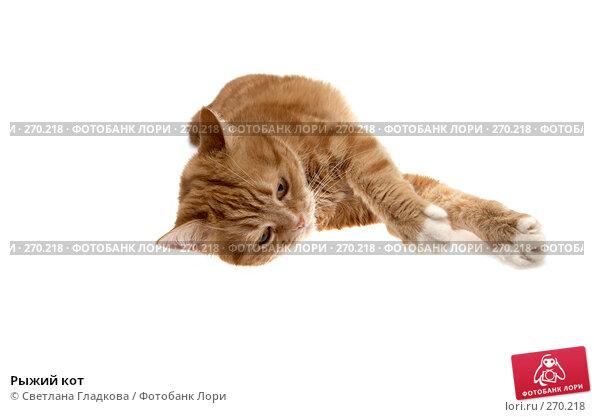 Рыжий кот, фото № 270218, снято 8 апреля 2008 г. (c) Cветлана Гладкова / Фотобанк Лори