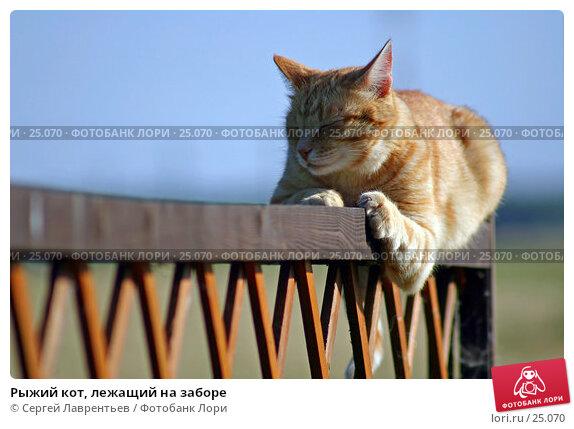 Купить «Рыжий кот, лежащий на заборе», фото № 25070, снято 18 декабря 2017 г. (c) Сергей Лаврентьев / Фотобанк Лори