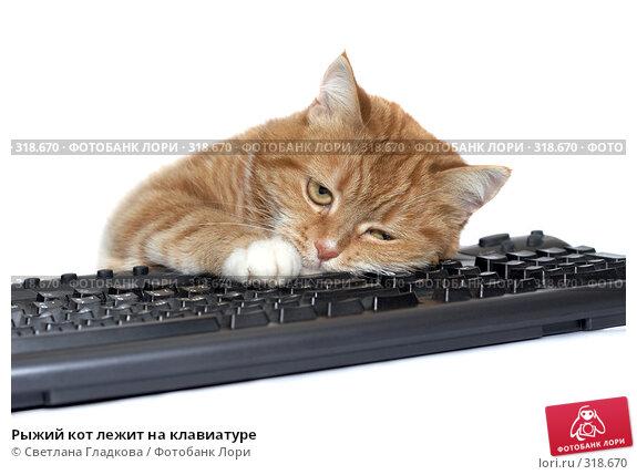 Купить «Рыжий кот лежит на клавиатуре», фото № 318670, снято 20 апреля 2008 г. (c) Cветлана Гладкова / Фотобанк Лори