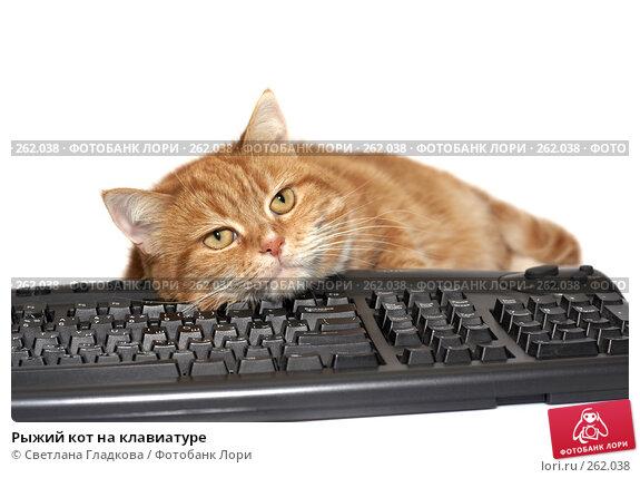 Рыжий кот на клавиатуре, фото № 262038, снято 20 апреля 2008 г. (c) Cветлана Гладкова / Фотобанк Лори