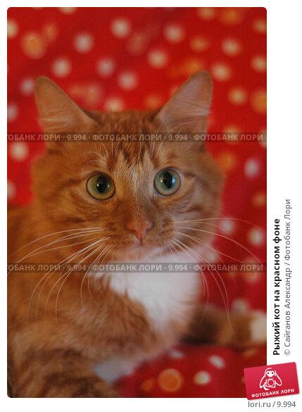Рыжий кот на красном фоне, фото № 9994, снято 16 января 2005 г. (c) Сайганов Александр / Фотобанк Лори