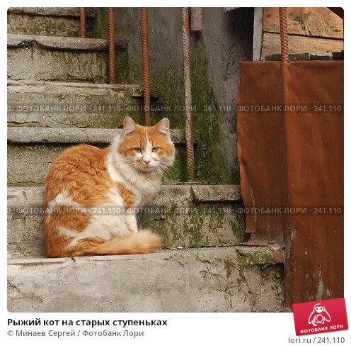 Рыжий кот на старых ступеньках, фото № 241110, снято 8 апреля 2007 г. (c) Минаев Сергей / Фотобанк Лори