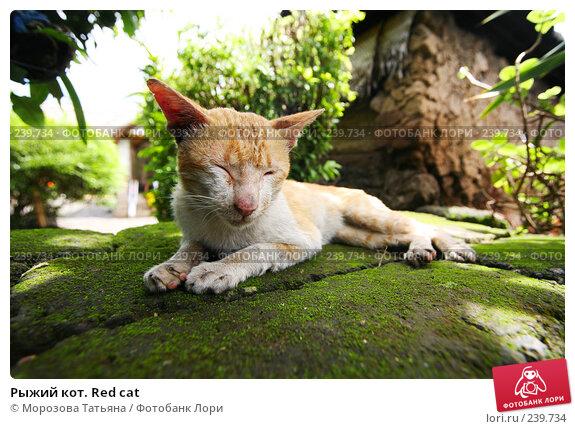 Рыжий кот. Red cat, фото № 239734, снято 24 февраля 2008 г. (c) Морозова Татьяна / Фотобанк Лори