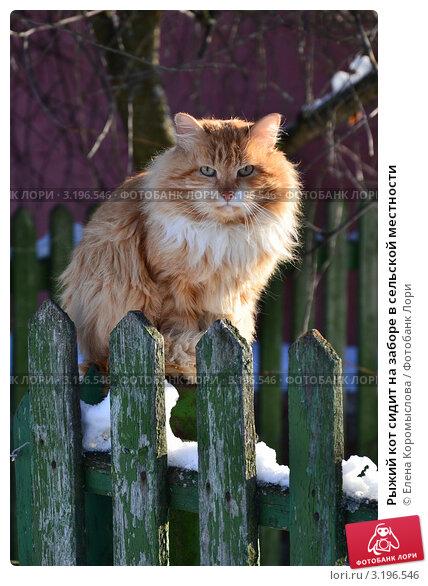 Купить «Рыжий кот сидит на заборе в сельской местности», эксклюзивное фото № 3196546, снято 25 января 2012 г. (c) Елена Коромыслова / Фотобанк Лори