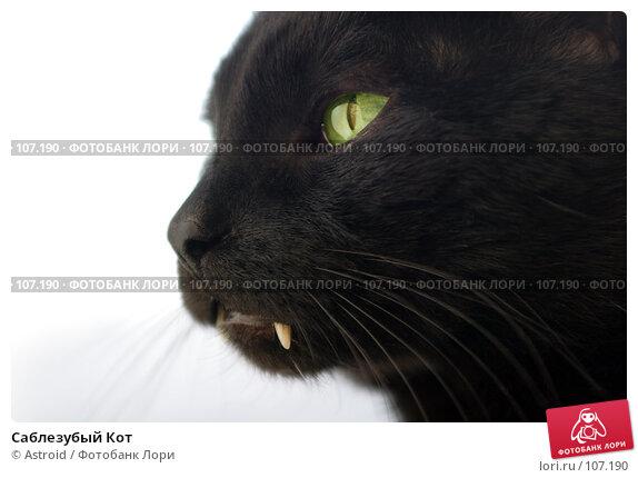 Саблезубый Кот, фото № 107190, снято 4 апреля 2006 г. (c) Astroid / Фотобанк Лори