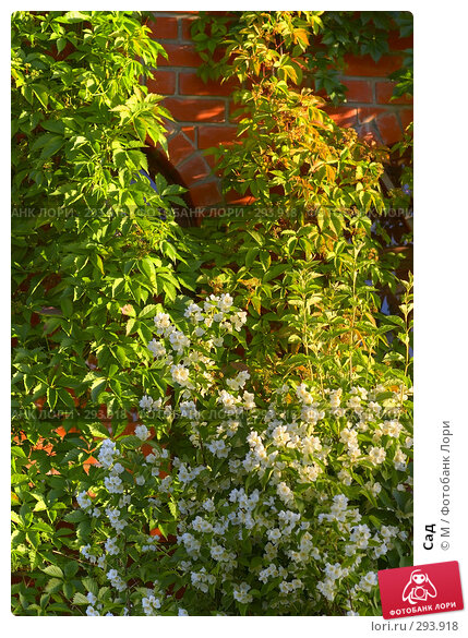 Купить «Сад», фото № 293918, снято 21 апреля 2018 г. (c) М / Фотобанк Лори