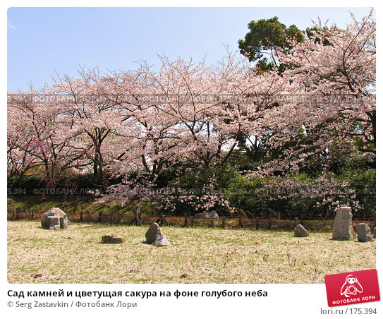 Сад камней и цветущая сакура на фоне голубого неба, фото № 175394, снято 3 апреля 2007 г. (c) Serg Zastavkin / Фотобанк Лори