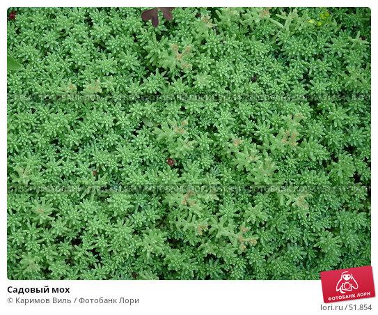 Садовый мох, фото № 51854, снято 11 июня 2007 г. (c) Каримов Виль / Фотобанк Лори