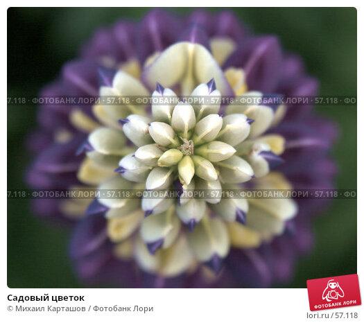 Садовый цветок, эксклюзивное фото № 57118, снято 10 июня 2007 г. (c) Михаил Карташов / Фотобанк Лори