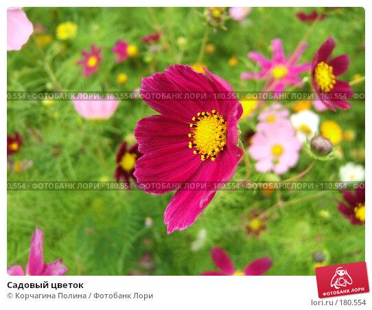 Садовый цветок, фото № 180554, снято 26 июля 2007 г. (c) Корчагина Полина / Фотобанк Лори