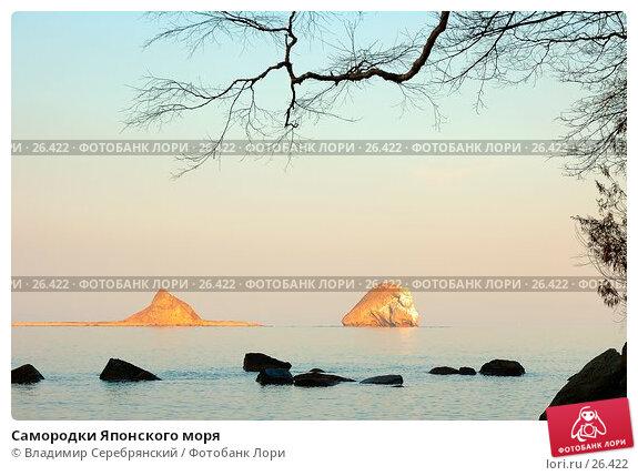 Самородки Японского моря, фото № 26422, снято 23 июня 2017 г. (c) Владимир Серебрянский / Фотобанк Лори