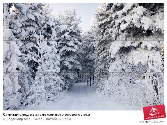 Купить «Санный след из заснеженного елового леса», фото № 2355290, снято 23 января 2011 г. (c) Владимир Мельников / Фотобанк Лори