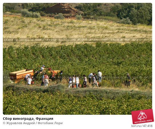Сбор винограда, Франция, эксклюзивное фото № 47418, снято 26 сентября 2006 г. (c) Журавлев Андрей / Фотобанк Лори