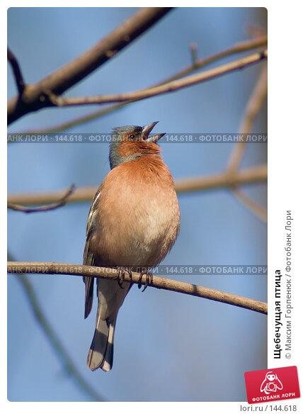 Купить «Щебечущая птица», фото № 144618, снято 8 апреля 2005 г. (c) Максим Горпенюк / Фотобанк Лори