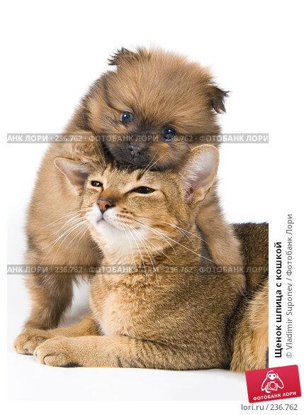 Щенок шпица с кошкой, фото № 236762, снято 16 марта 2008 г. (c) Vladimir Suponev / Фотобанк Лори