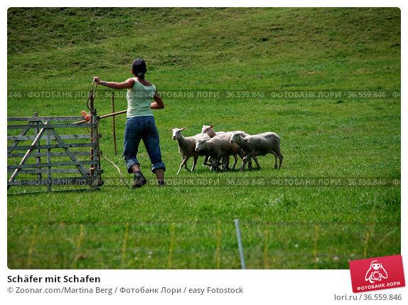 Schäfer mit Schafen. Стоковое фото, фотограф Zoonar.com/Martina Berg / easy Fotostock / Фотобанк Лори