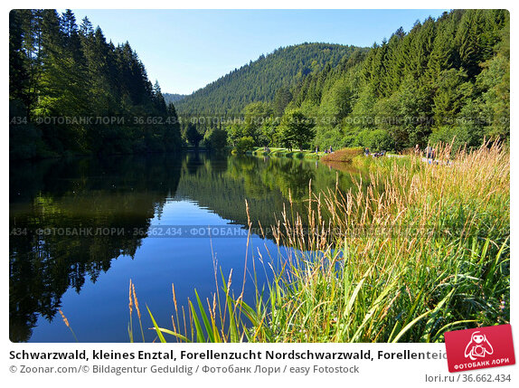 Schwarzwald, kleines Enztal, Forellenzucht Nordschwarzwald, Forellenteichbecken... Стоковое фото, фотограф Zoonar.com/© Bildagentur Geduldig / easy Fotostock / Фотобанк Лори