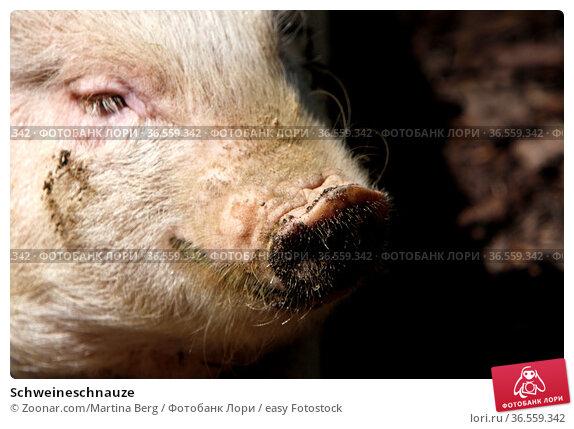 Schweineschnauze. Стоковое фото, фотограф Zoonar.com/Martina Berg / easy Fotostock / Фотобанк Лори