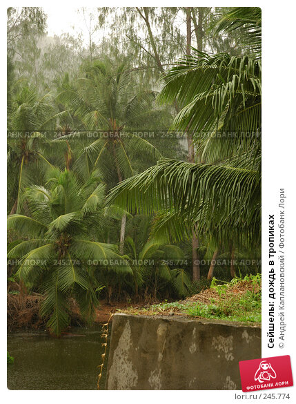 Купить «Сейшелы: дождь в тропиках», фото № 245774, снято 31 августа 2007 г. (c) Андрей Каплановский / Фотобанк Лори