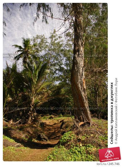 Купить «Сейшелы: тропинка в джунглях», фото № 245746, снято 29 августа 2007 г. (c) Андрей Каплановский / Фотобанк Лори