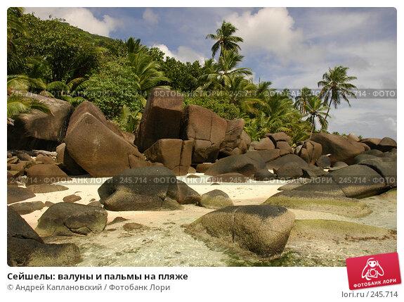 Сейшелы: валуны и пальмы на пляже, фото № 245714, снято 28 августа 2007 г. (c) Андрей Каплановский / Фотобанк Лори