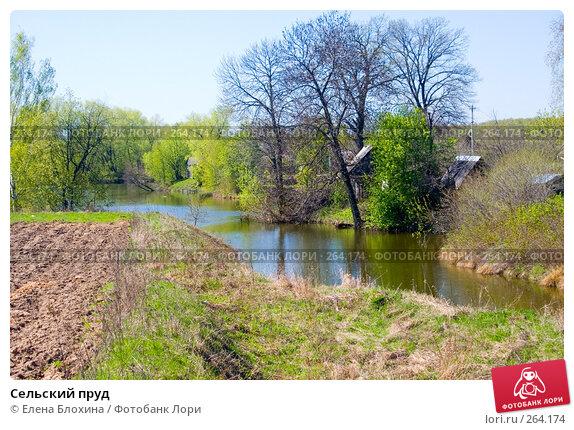 Купить «Сельский пруд», фото № 264174, снято 25 апреля 2008 г. (c) Елена Блохина / Фотобанк Лори