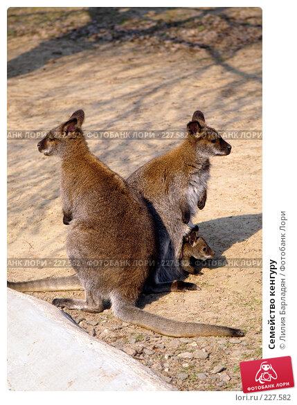 Семейство кенгуру, фото № 227582, снято 3 мая 2006 г. (c) Лилия Барладян / Фотобанк Лори