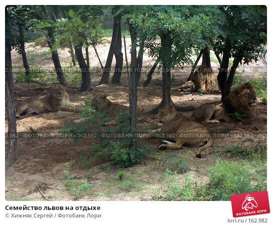 Семейство львов на отдыхе, фото № 162982, снято 10 июля 2007 г. (c) Хижняк Сергей / Фотобанк Лори