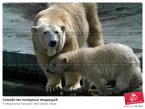 Семейство полярных медведей, фото № 98458, снято 12 апреля 2006 г. (c) Морозова Татьяна / Фотобанк Лори