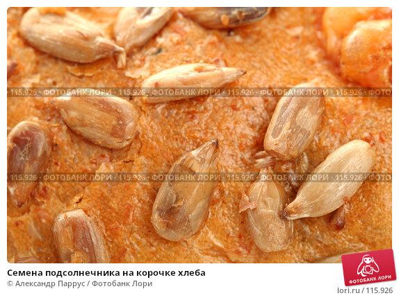 Семена подсолнечника на корочке хлеба, фото № 115926, снято 14 сентября 2007 г. (c) Александр Паррус / Фотобанк Лори