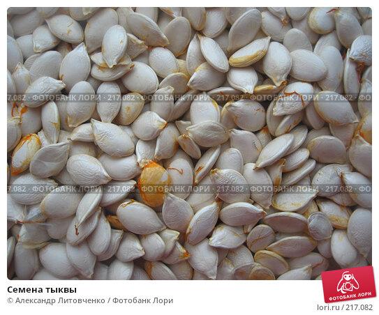 Купить «Семена тыквы», фото № 217082, снято 12 января 2008 г. (c) Александр Литовченко / Фотобанк Лори